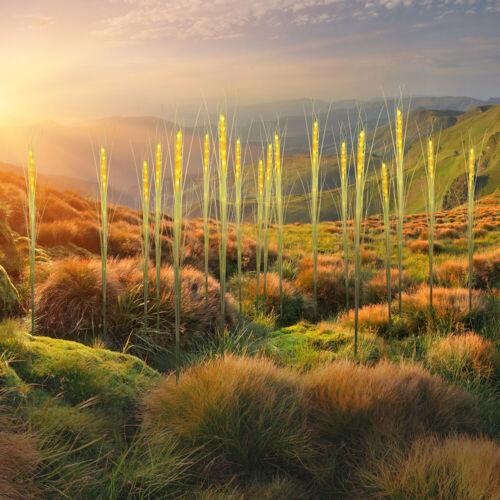 Decorazione LED Lampada Esterno cereali-Optik PICCHETTO ESTERNO terrazze Steck lampada solare