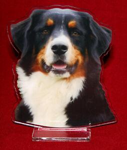 statuette-photosculptee-10x15-cm-chien-bouvier-bernois-2-dog-hund-perro-cane