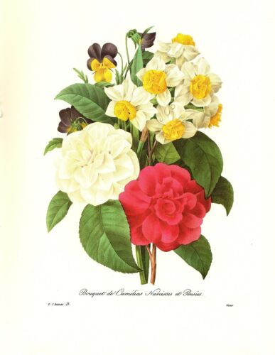 1991 Vintage REDOUTE FLOWER #13 CAMELLIA NARCISSUS PANSIES Color Art Lithograph