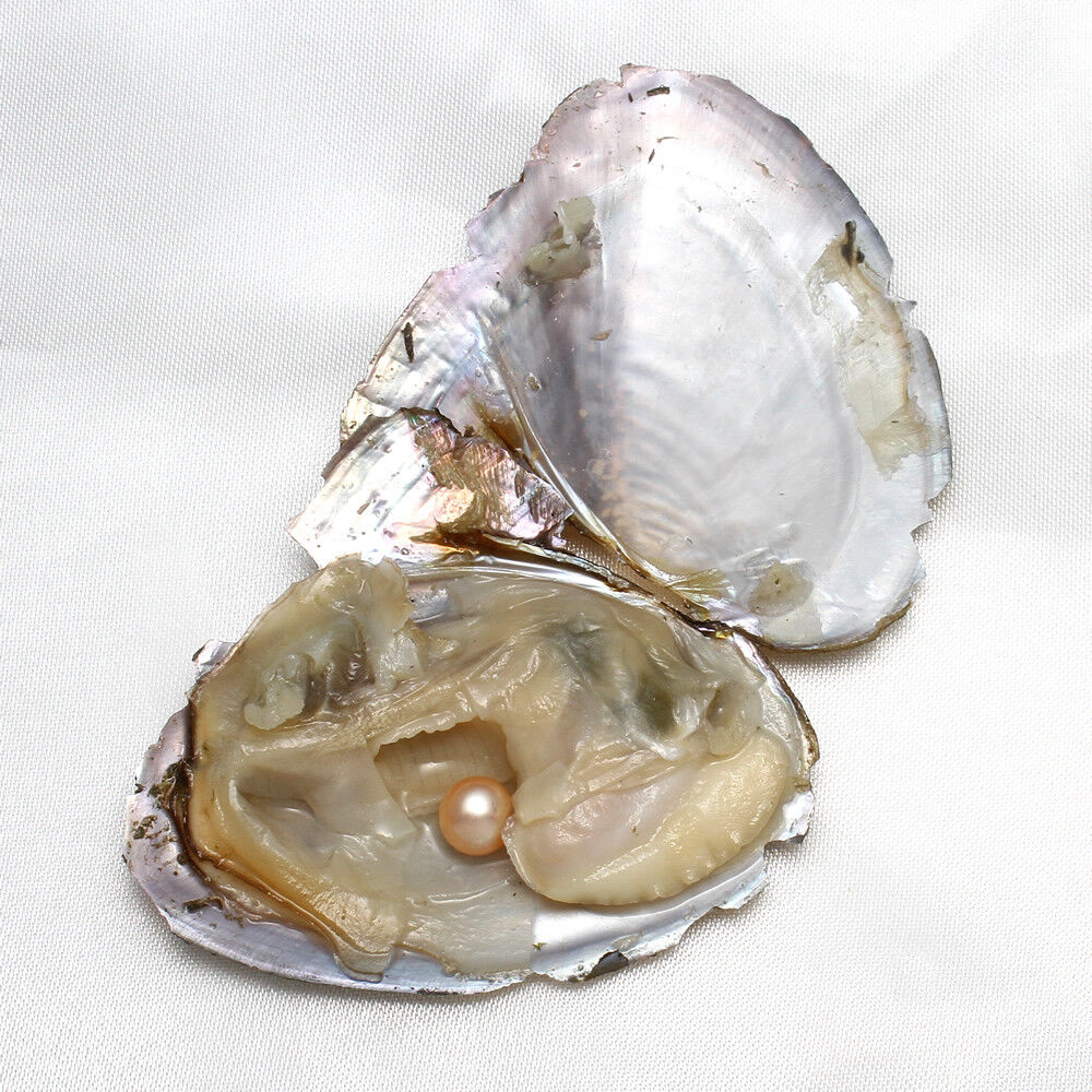 50PC Akoya Oysters with Large Pink Pearls  6mm-8mm Open Yourself Gift-Party