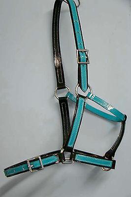 Full Size Halter / Headstall - Black/Turquoise PVC