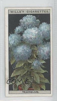 1925 Wills Flower Culture In Pots #48 Trachelium Or Blue Throat-wort Card 0a1 Bright Luster