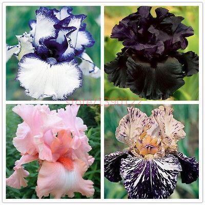 100pcs Mix Rare Iris Seeds Heirloom Tectorum Elegant In Style Orchid Seeds,bonsai Flower Seeds