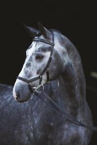 HORSEWARE-Rambo-Micklem-Competition-Bridle-Ledertrense-Trensenzaum-UVP-172-90