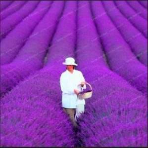 French-Provence-100-PIECES-graines-LAVANDE-Bonsai-organique-plantes-fleurs-nouveau-jardin