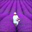 French-Provence-100-PIECES-graines-LAVANDE-Bonsai-organique-plantes-fleurs-nouveau-jardin miniature 1