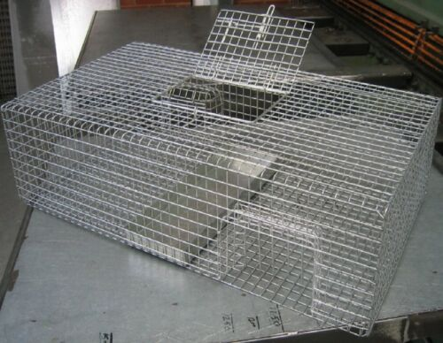 Pigeon Bird Trap