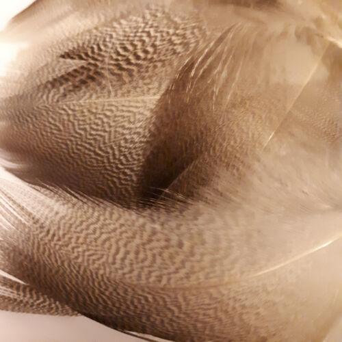 Bronze Mallard Fly Tying Feathers Bag Of Mixed Sizes