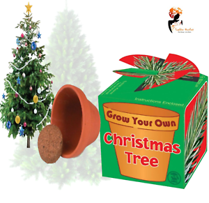 Christmas Tree Fillers.Details About Grow Your Own Christmas Tree Kids Christmas Gift Toy Stocking Filler Party Lot