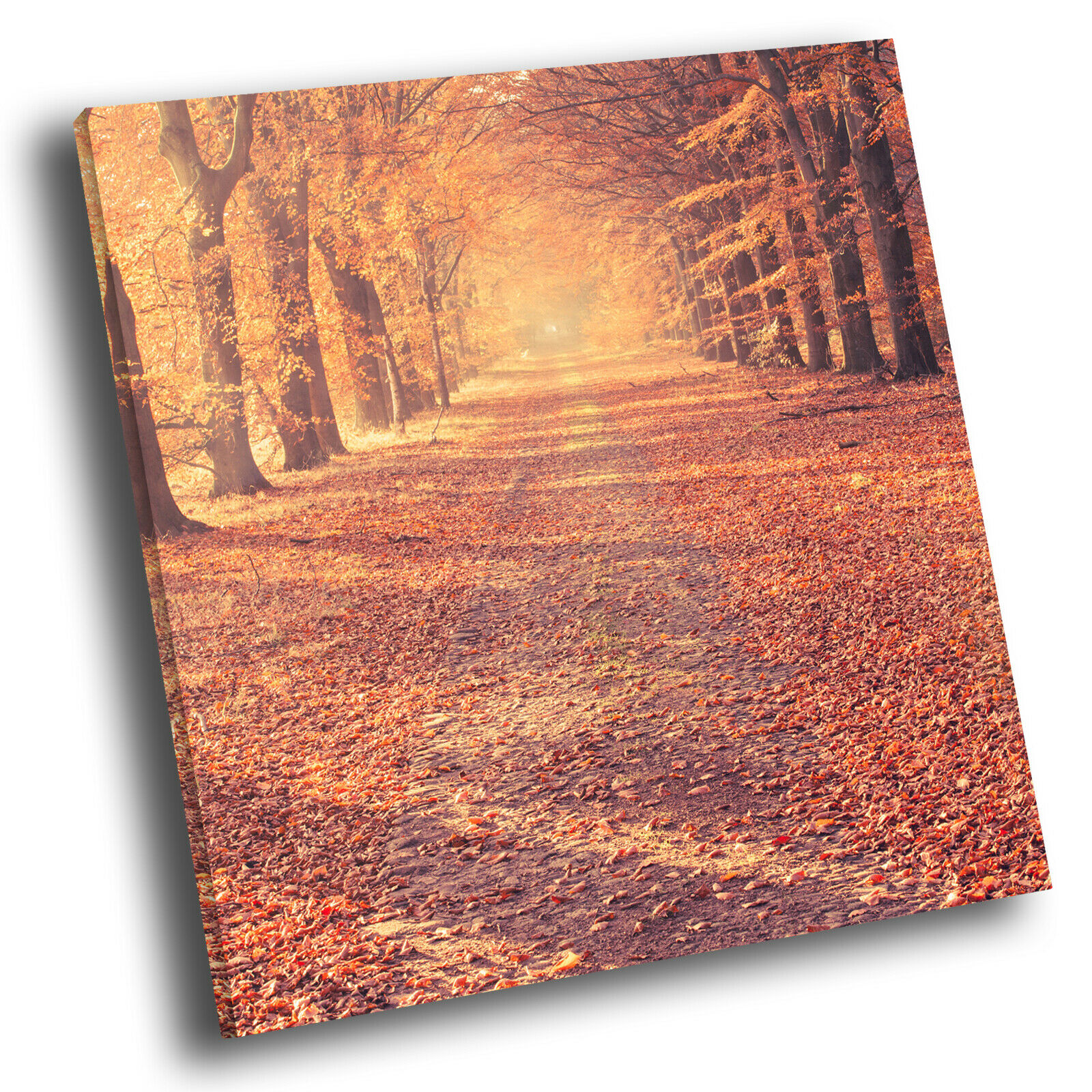 Orange braun Autmn Trees Square Scenic Canvas Wall Art Large Picture Print