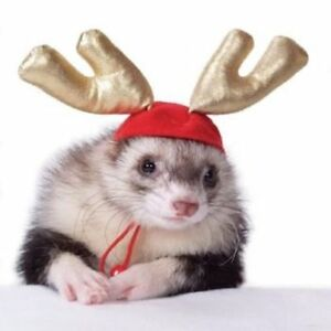 Christmas Ferret.Details About Marshall Pet Ferret Christmas Theme Holiday Antlers Free Shipping To Usa Only