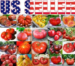 30-ORGANICALLY-GROWN-GIANT-Tomato-Seeds-Mix-22-Varieties-Heirloom-NON-GMO-USA