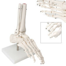 New Listinghuman Joint Foot Anatomical Skeleton Model Medical Anatomy Life Size Industry