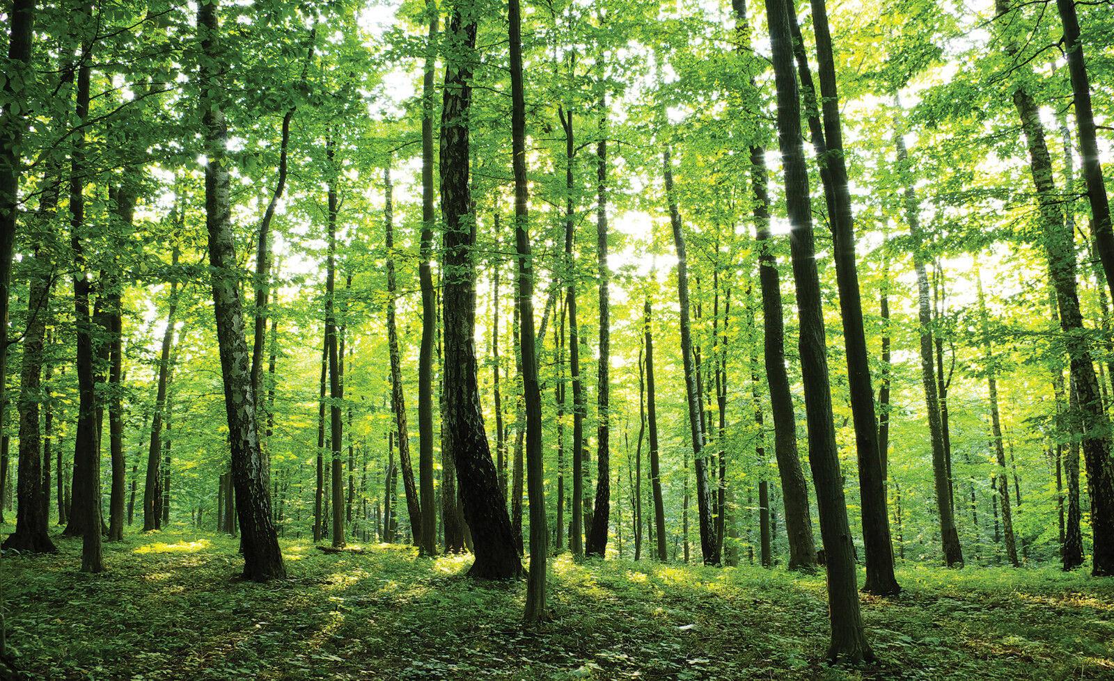 VLIES Fototapete-WALDLICHTUNG-(186)-Wald Bäume Sonne Grün Natur Landschaft xxl