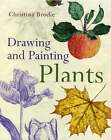 Drawing and Painting Plants by Christina Brodie (Paperback, 2006)