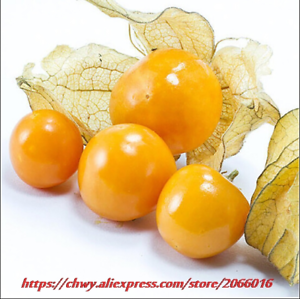 100 Seeds Seeds delicious TOMATO GOLD