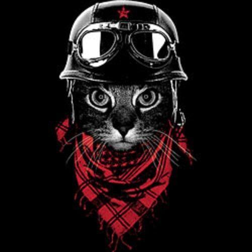 Adventurer Cat   Tshirt   Sizes//Colors
