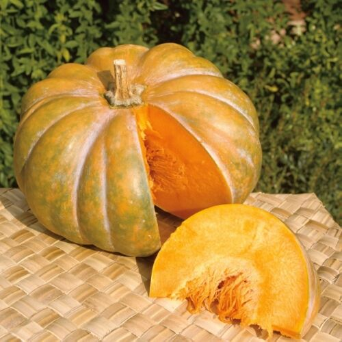 Grosses graines-courge courge musquee de provence 15 graines