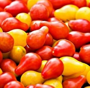 * Solanum Lycopersicum * Pear Teardrop Tomato Seeds * Yellow - Red - Ivory *rare