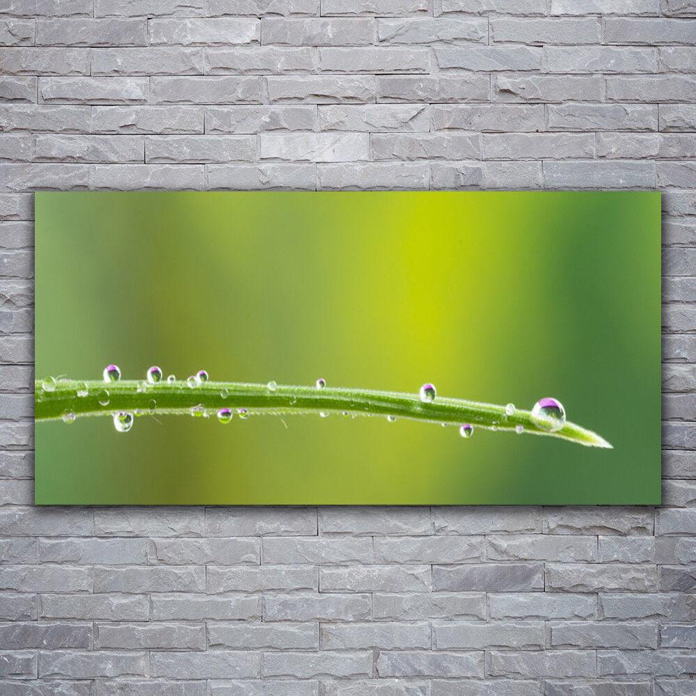 Photo sur toile Tableau Image Impression 120x60 Floral Rosée Herbe