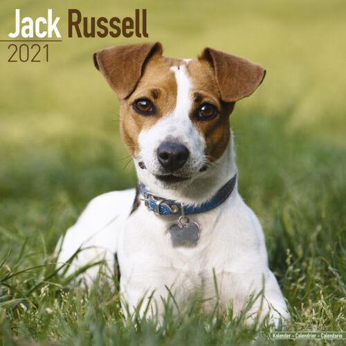 Jack Russell 2021 Dog Breed Calendar 15/% OFF MULTI ORDERS!