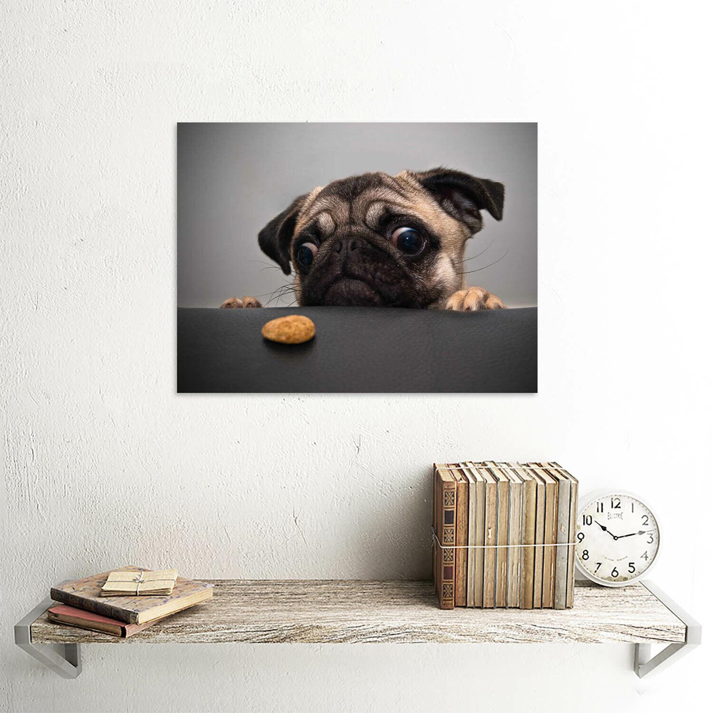 ANIMAL PHOTOGRAPHY PORTRAIT PUG DOG TREAT FOOD EYES CUTE 30x40 cms ART POSTER PR