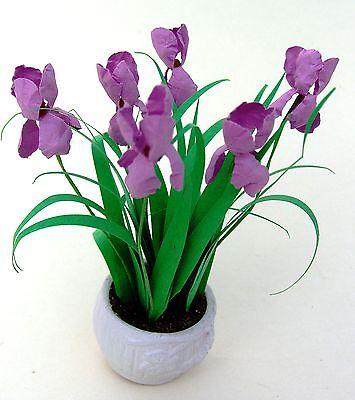"""""""kit Fiore Rosa-porpora Iris's Casa Delle Bambole Miniatura In Giardino 12th Gratis Uk P & P-mostra Il Titolo Originale"""
