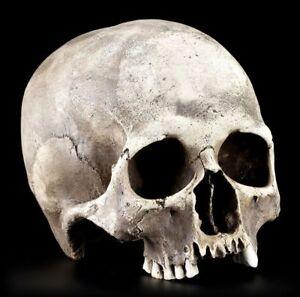 Skull-Replica-Woman-Menschen-Skull-Lifelike-Anatomically-Skull
