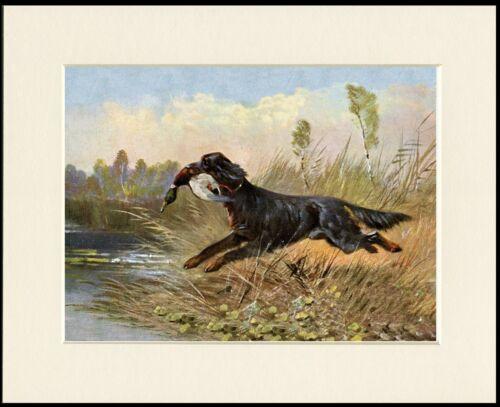 GORDON SETTER DOG RETRIEVING DUCK LOVELY PRINT MOUNTED READY TO FRAME