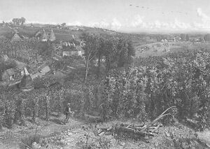 KENT ENGLAND HOP YARD GARDEN PLANT BEER FARM BREWERY ~ 1880 Art Print Engraving