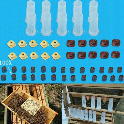 Complete queen rearing cup kit system bee beekeep catcher box /& 100 cell cups/_eu