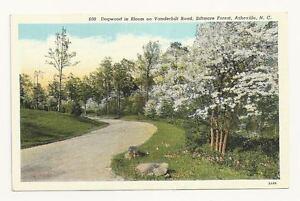 ASHEVILLE-NC-Vanderbilt-Road-Dogwood-Trees-Biltmore-Vtg