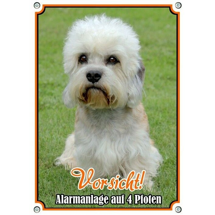 Cani SCUDO Dandie Dinmont Terrier-Premium scudo in qualità TOP