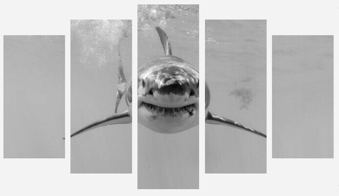 Grand Requin Blanc-Mer Animal Noir & Blanc Mur 5 Split Panneau Toile Photos