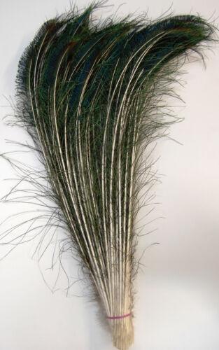 25 Pcs PEACOCK SWORDS Natural Feathers 15-20 Craft/Pad/Decor/Costume/Hats/Art