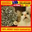 5g-Dried-Catnip-100-Natural-Organic-Nepeta-cataria-Catnip-For-Cats-Kittens