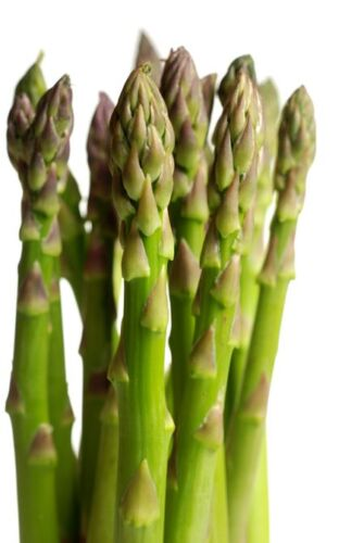 Asparagus Seed Mary Washington Asparagus Seeds Fresh Seed  FREE Shipping
