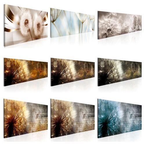BLUMEN PUSTEBLUME PFLANZEN Wandbilder xxl Bilder Vlies Leinwand b-A-0371-b-a