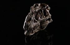 Tyrannosaurus T-Rex Skull Resin Fossil Model, Dinosaur Collectibles Replica