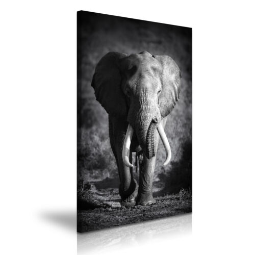 NEW ANIMAL Elephant 5 Canvas 1p Framed  Painted Wall Art ~More Size