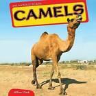 Camels by Willow Clark (Hardback, 2012)