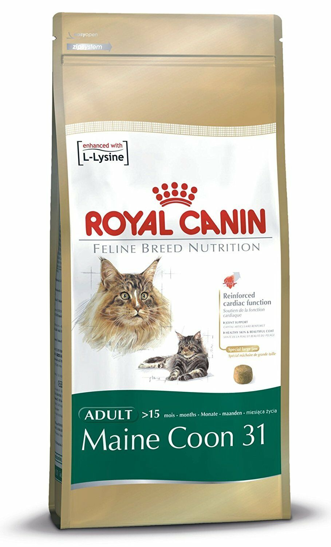 royal canin cibo per gatti Maine coon 31 4KG 4000G