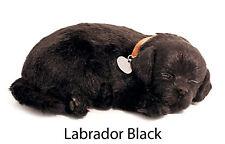 Labrador Black - Il cucciolo che respira - PERFECT PETZZZ