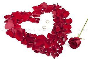 Composition Photo Rose Petale Bouquet Amour Coeur Design Fleur Rouge