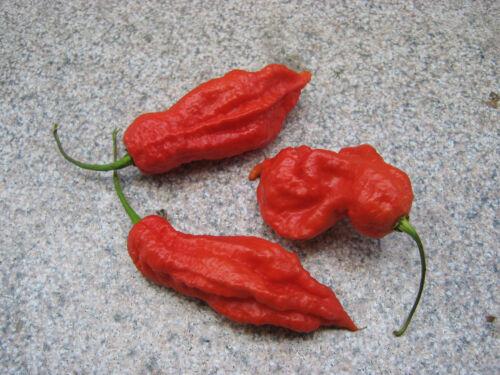 Super Hot 10 Samen Jay/'s Red Ghost Scorpion Chilisamen Chili