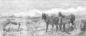 Lancs. Lytham Common, Lancashire, Antique Print, 1853 Adopter Une Technologie De Pointe