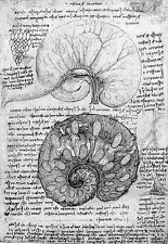 Leonardo Da Vinci Embryology  Anatomy Poster Print Art