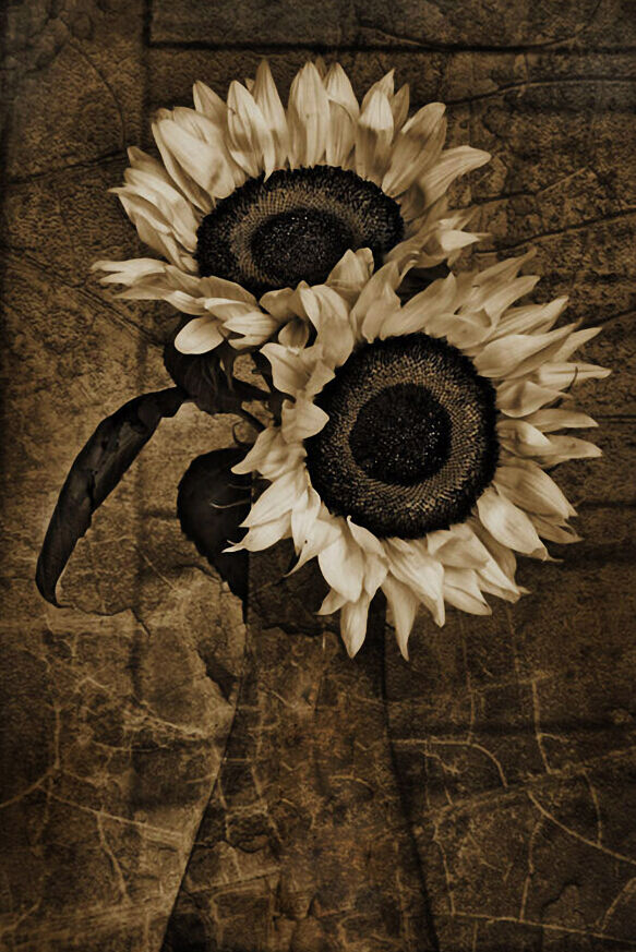 3D Tournesol 22 Photo Papier Peint en Autocollant Murale Plafond Chambre Art