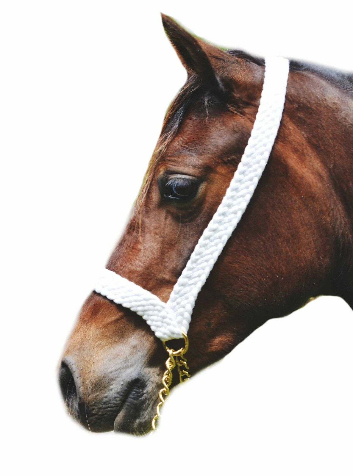 Plaited Show White Halter  8 Strand (1  wide) chain lead Welsh Cob C D Large M&M  up to 60% off