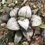 Haworthia-Succulent-plants-potted-Plants-Home-Garden-Bonsai-Garden-Decor thumbnail 1